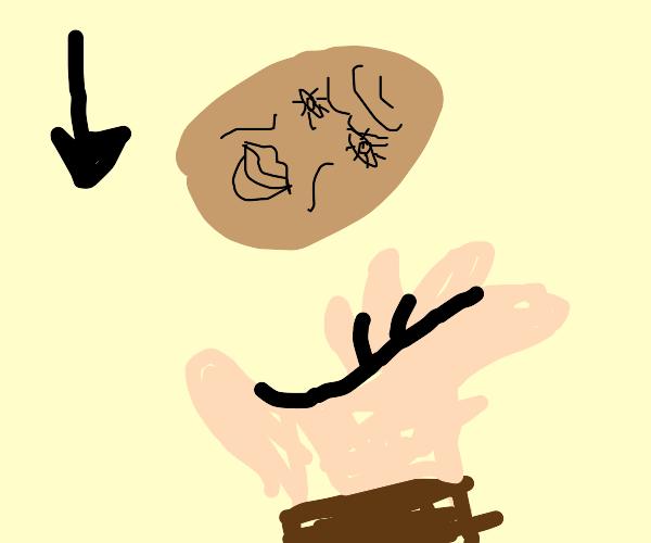 Catching Walnuts