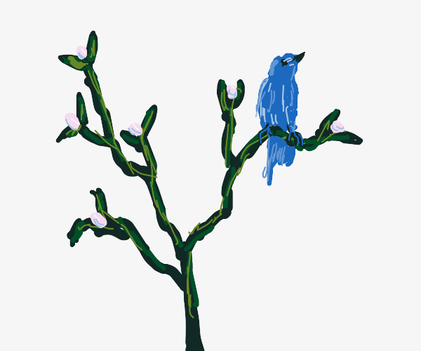 Blue bird on a mistletoe branch