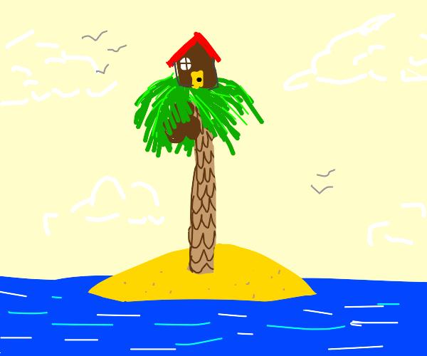 House on a palm tree