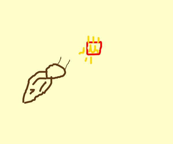Cockroach firing Fries