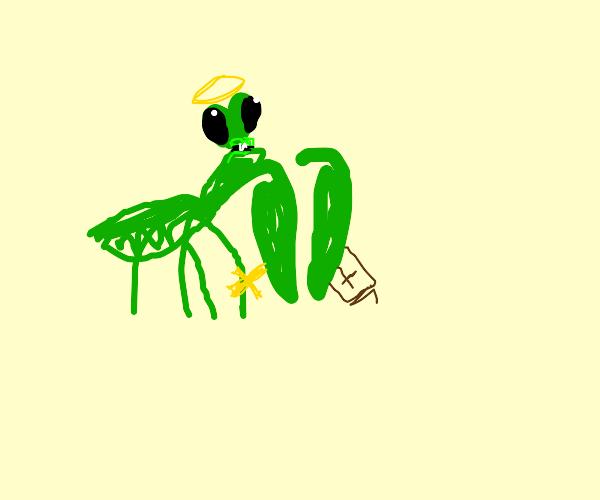 """""""PRAYING"""" mantis"""