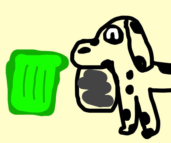 dalmatian carries a trash bag to the bin