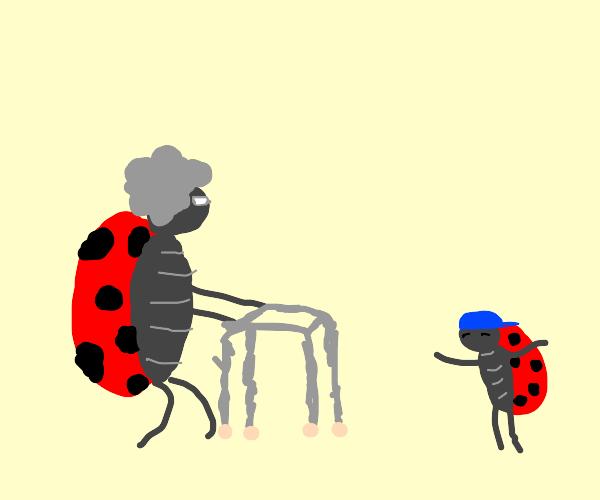 Boomer ladybug with grandson