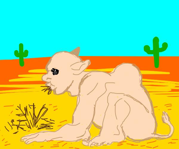 Human Camel
