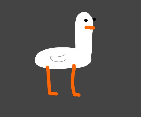 A goose!