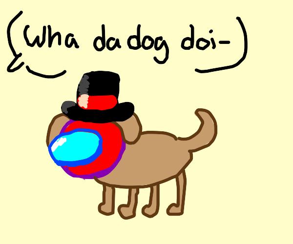 Sus dog with top hat (red helmet)