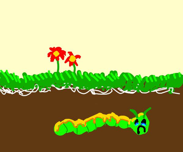 a sad underground catterpillar