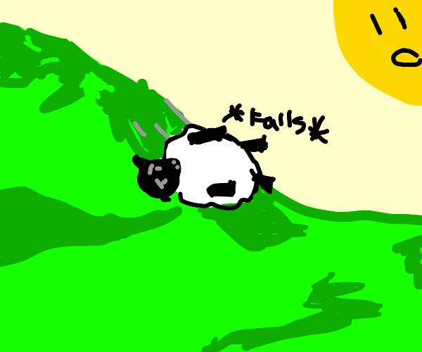 Sheep falling down a hill