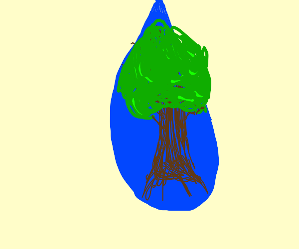 A tree in water