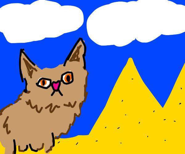 a cat near the pyramids