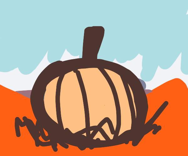 Largest pumpkin in the world found in desert
