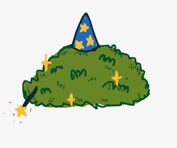 Wizard bush