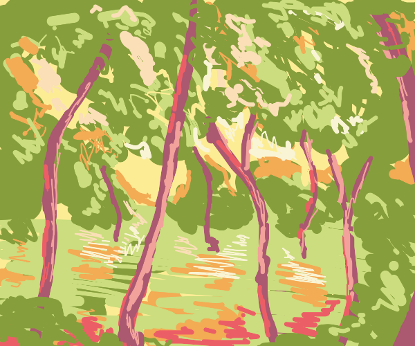 The canopy of a forest