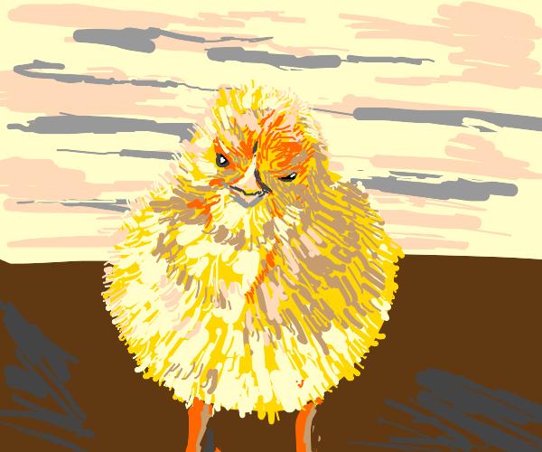 very fluffy chick!