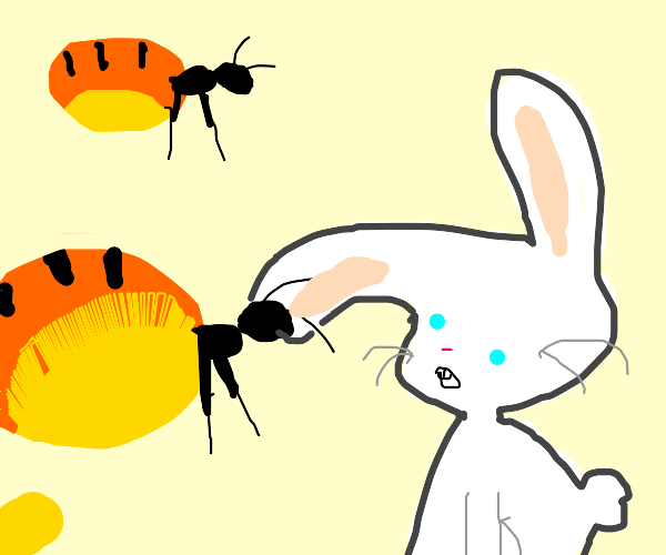 Rabbit gazes at giant flying honeypot ants