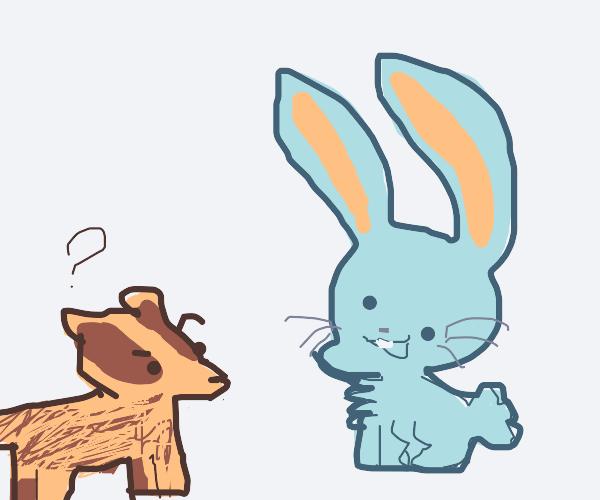 A badger looks at a rabbit