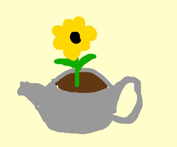 Flower in a Teapot