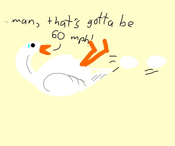 goose gives birth at 60 mph, wonder of nature