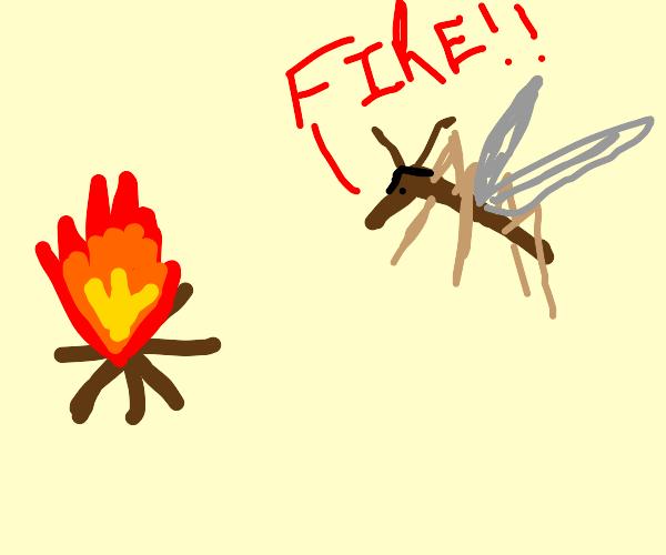 pyro mosquito