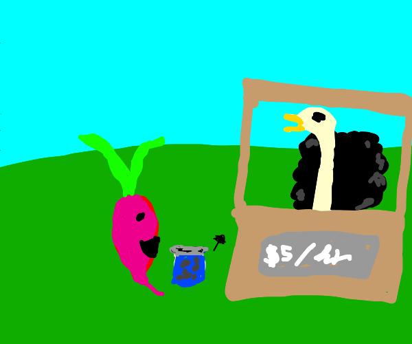 Radish hiring Ostrich