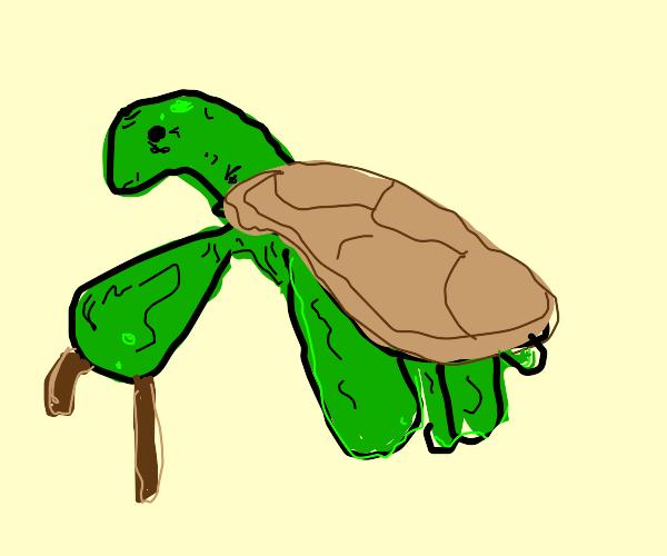 Elderly sea turtle