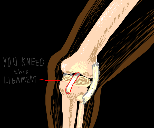 knee acl