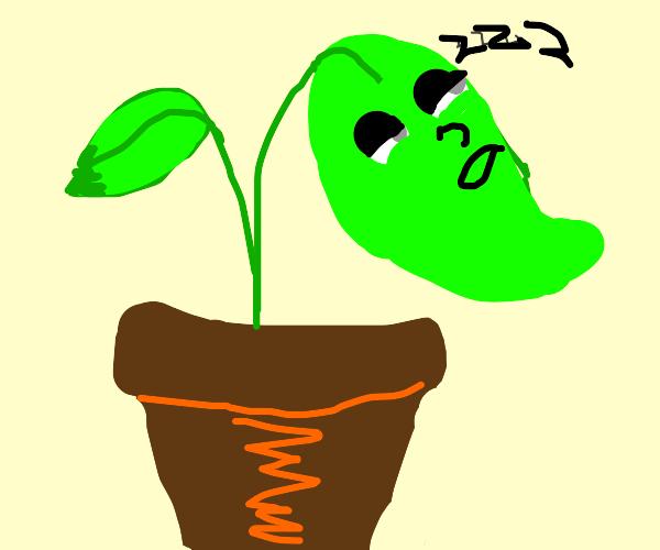 Sleepy Plant