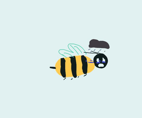 A very sad bee