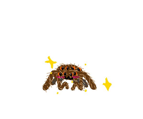 Kawaii tarantula