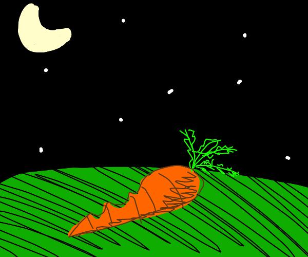 Half eaten carrot under the night sky