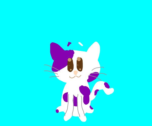 white and purple cat