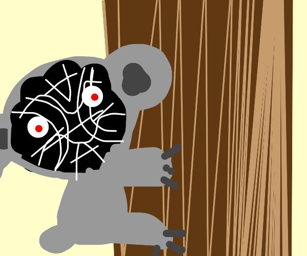 Koala Devil
