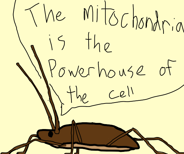 cockroach spitting facts