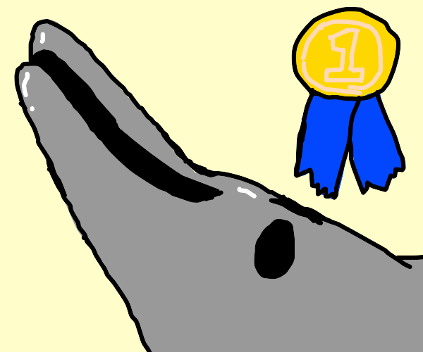 dolphin gets in first place