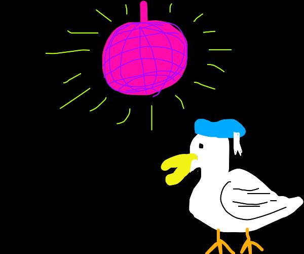 disco duck dance-off!