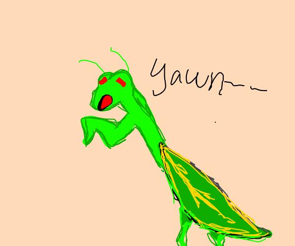 yawning mantis