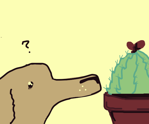 Puppy sniffs potted plants!