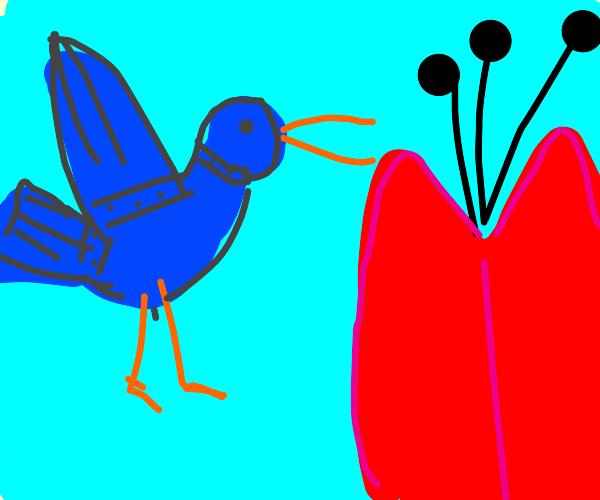 Robot Hummingbird