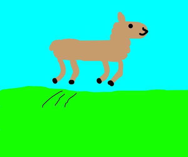 jumping lama