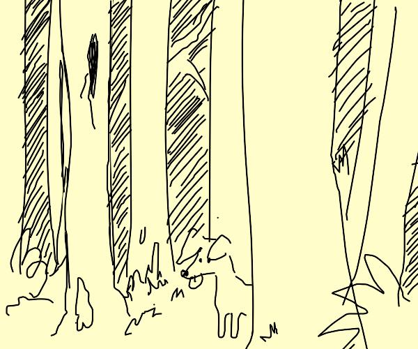 Cute dog in woods