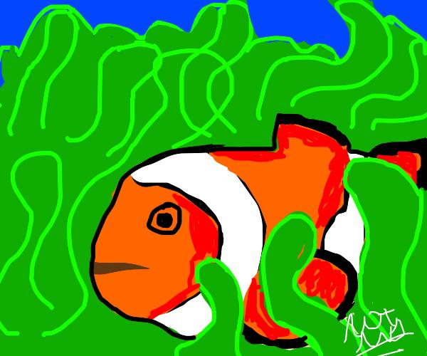 Clownfish (literally)
