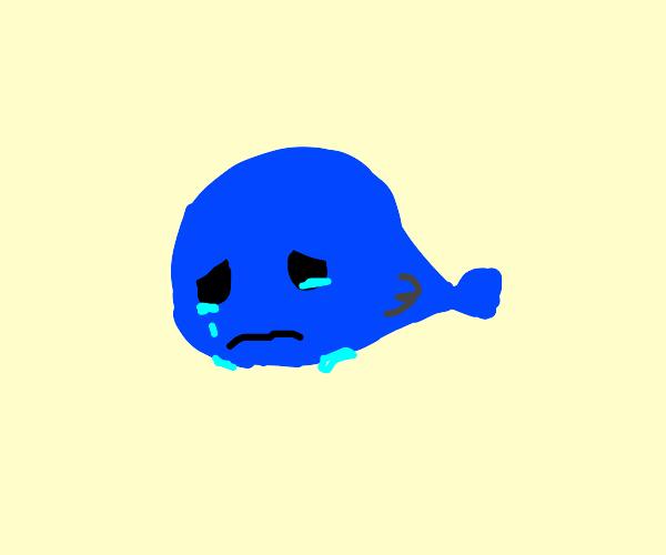 Sad Whale