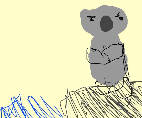 Bold Koala