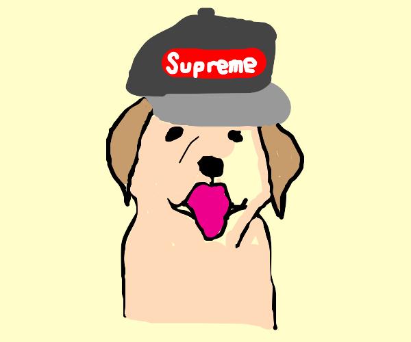 That dog cap