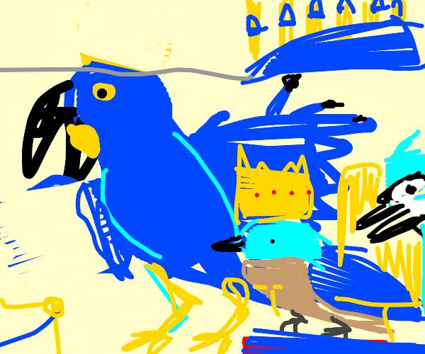 king blue bird
