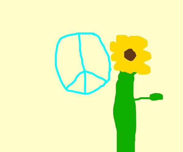 High hippie sunflower bro
