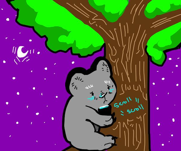 Koala with insomnia