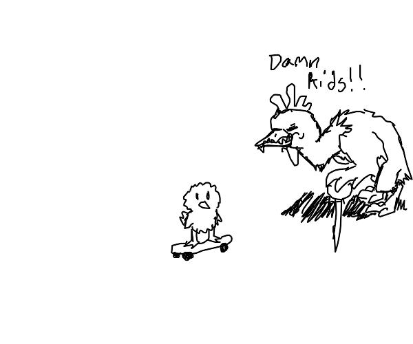 Elderly chicken