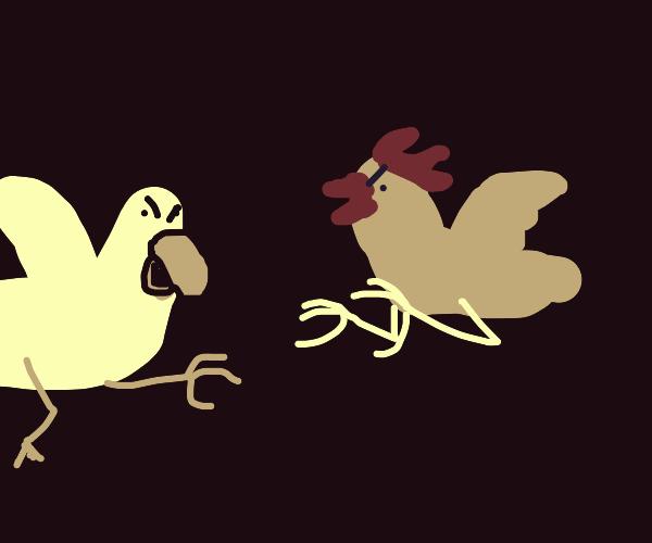 chicken vs duck