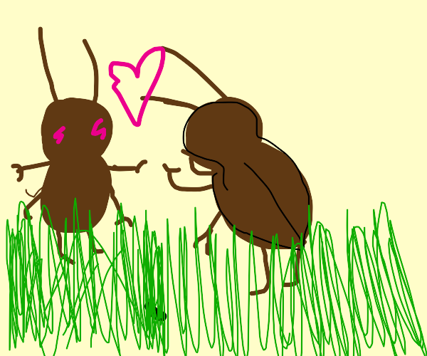 Two bugs in love